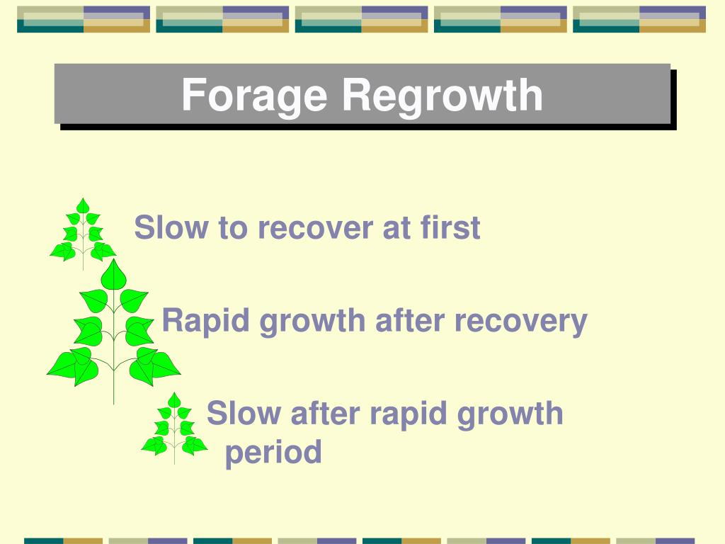 Forage Regrowth