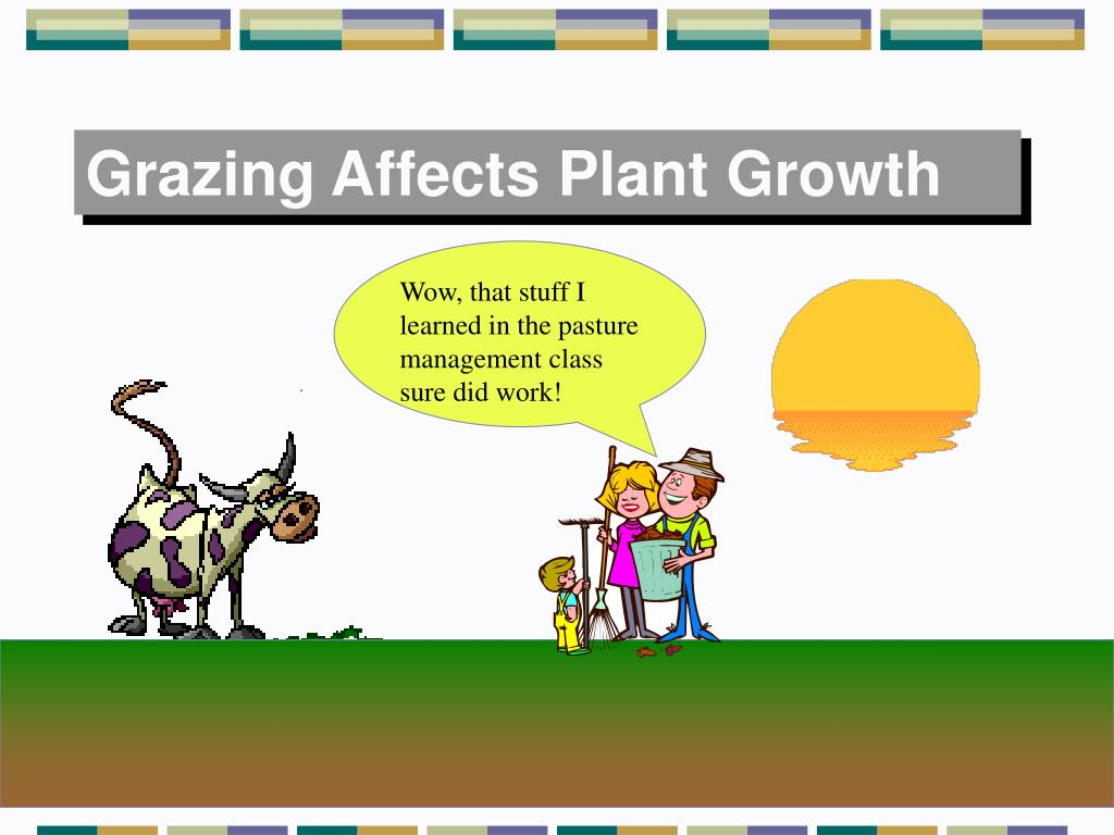 Grazing Affects Plant Growth