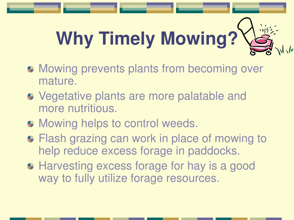 Why Timely Mowing?