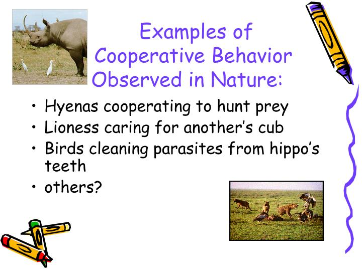 Examples of cooperative behavior observed in nature