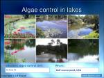 algae control in lakes