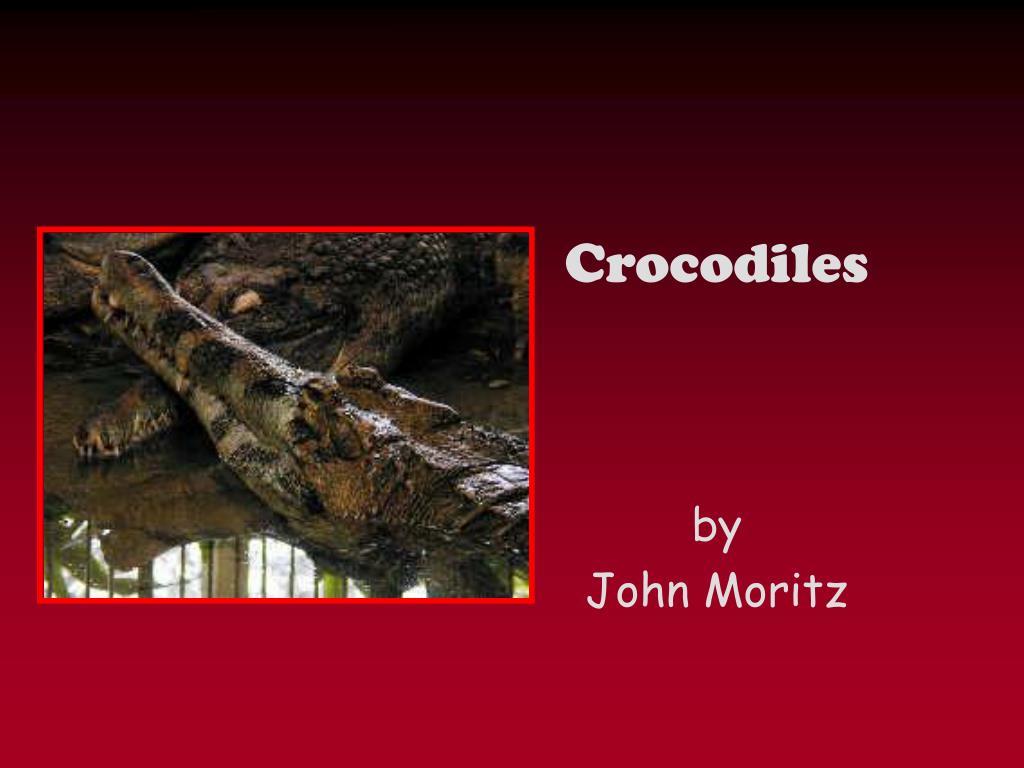 crocodiles l.