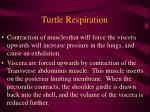 turtle respiration46