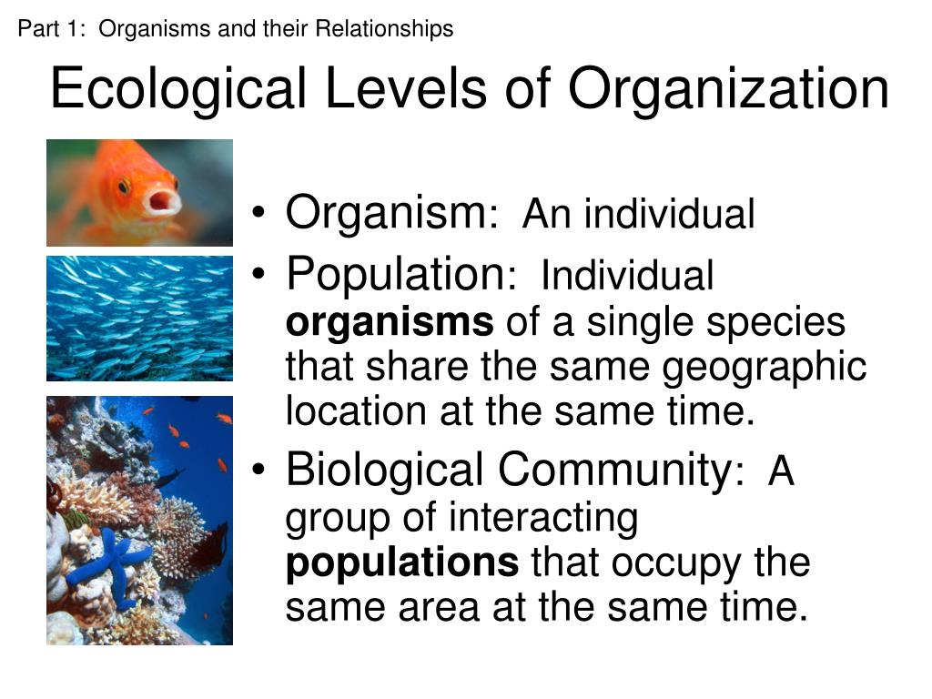 Ppt - Ecology Powerpoint Presentation  Free Download