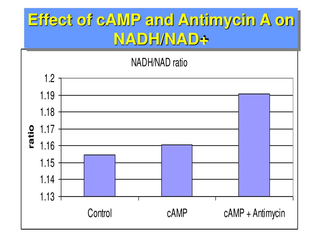 Effect of cAMP and Antimycin A on NADH/NAD+