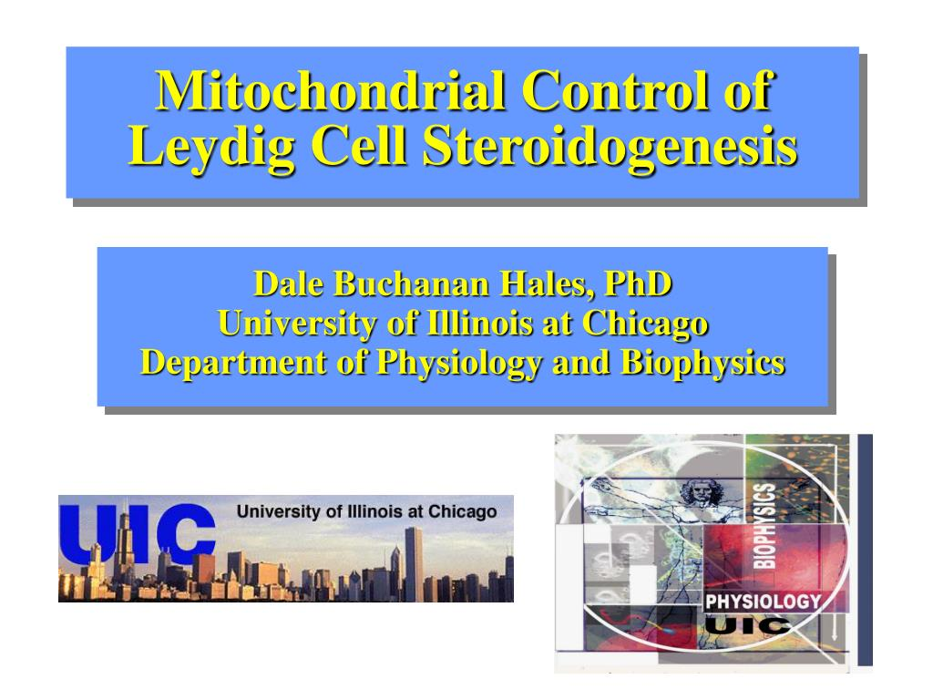 Mitochondrial Control of Leydig Cell Steroidogenesis