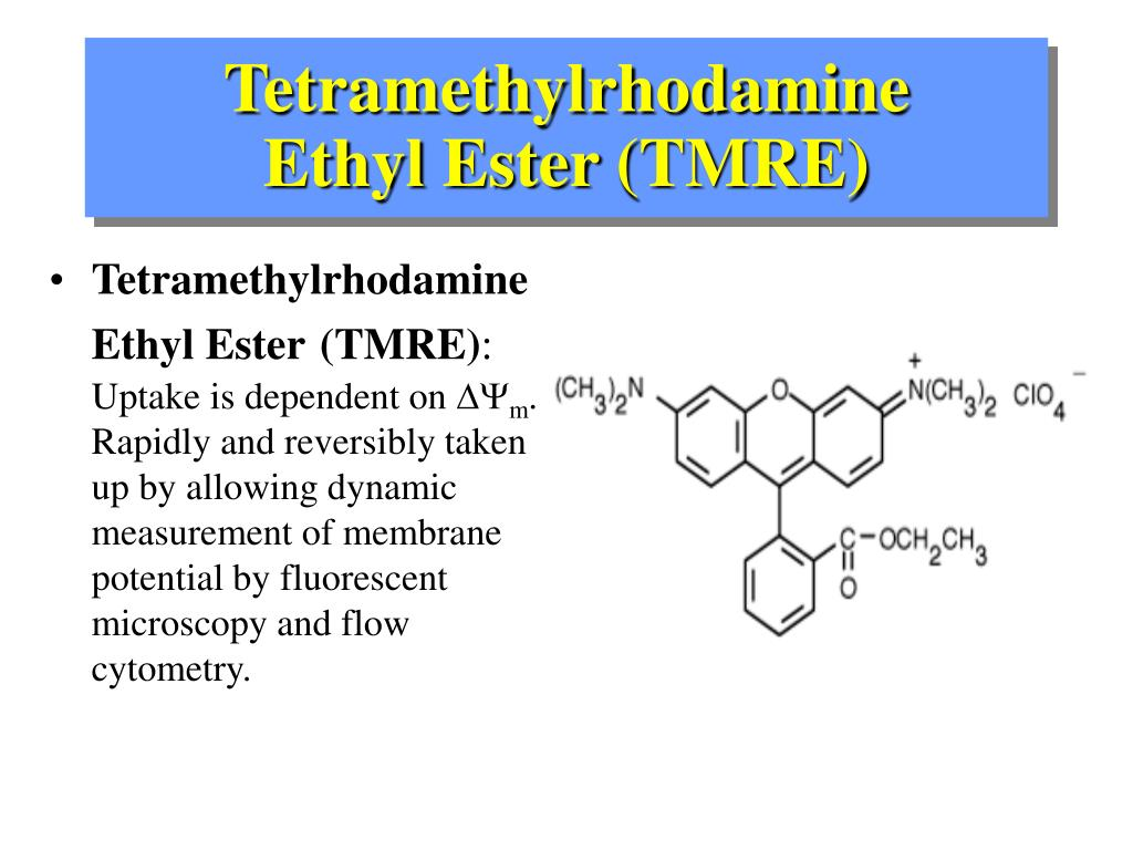 Tetramethylrhodamine