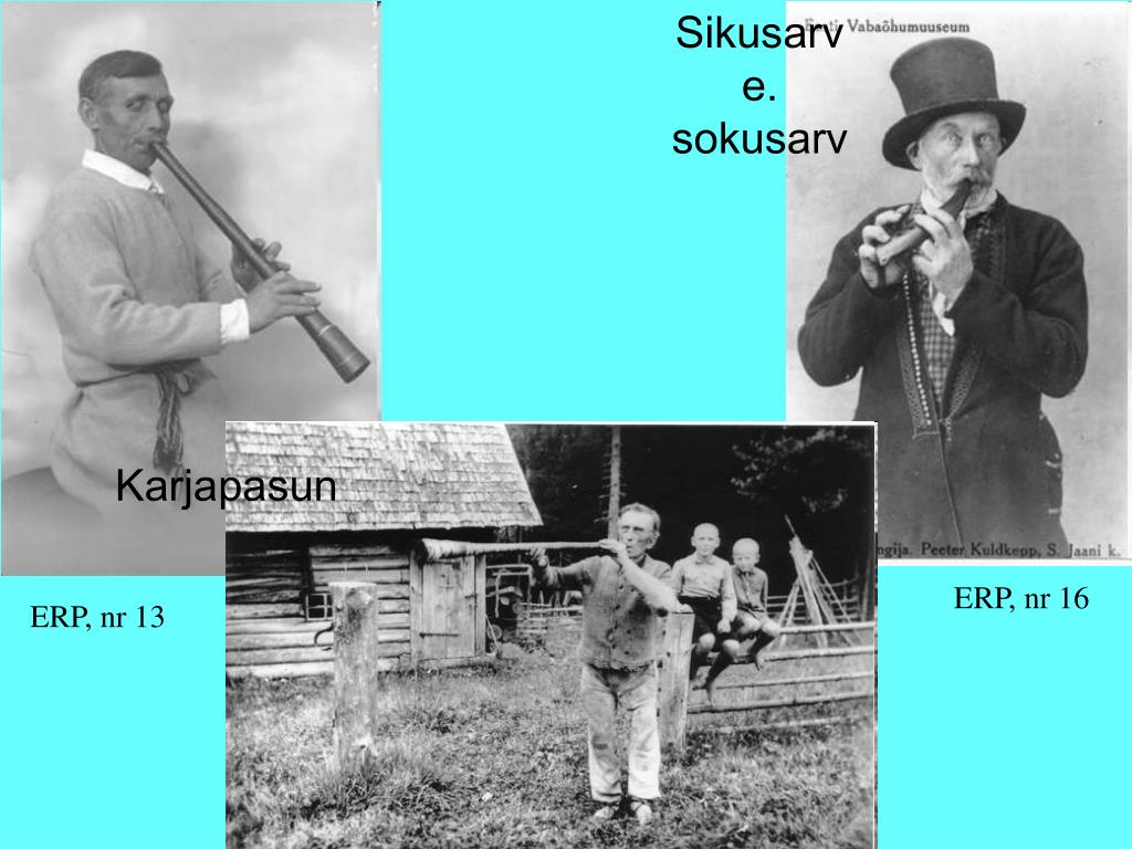 Sikusarv