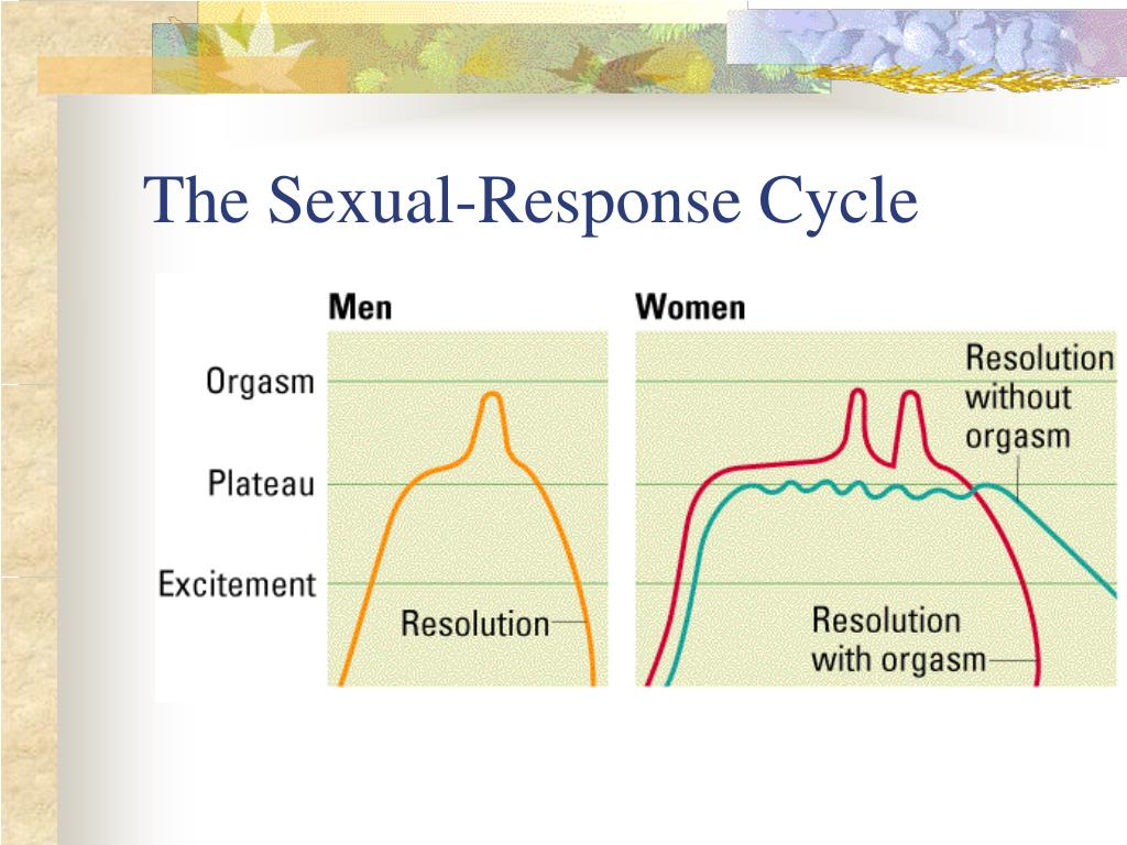 The Sexual-Response Cycle