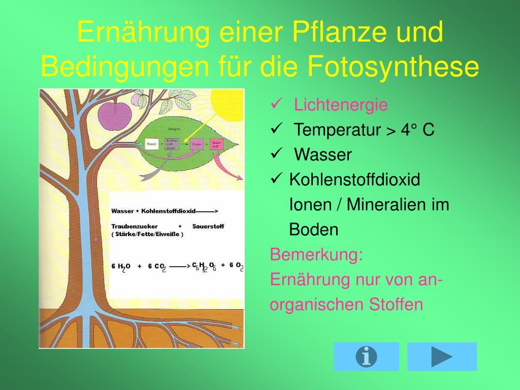 Die Fotosynthese