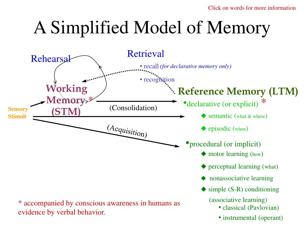 a simplified model of memory l.