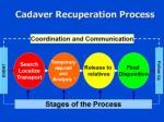 cadaver recuperation process