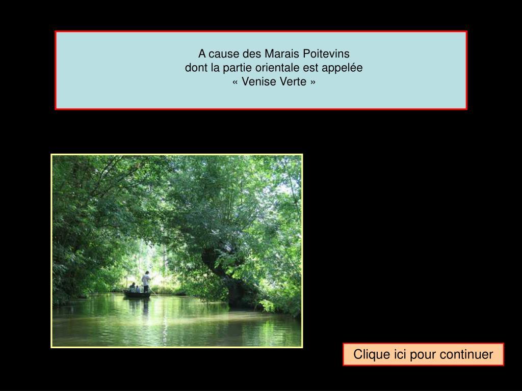 A cause des Marais Poitevins