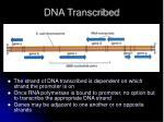 dna transcribed