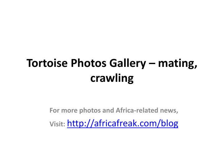Tortoise photos gallery mating crawling
