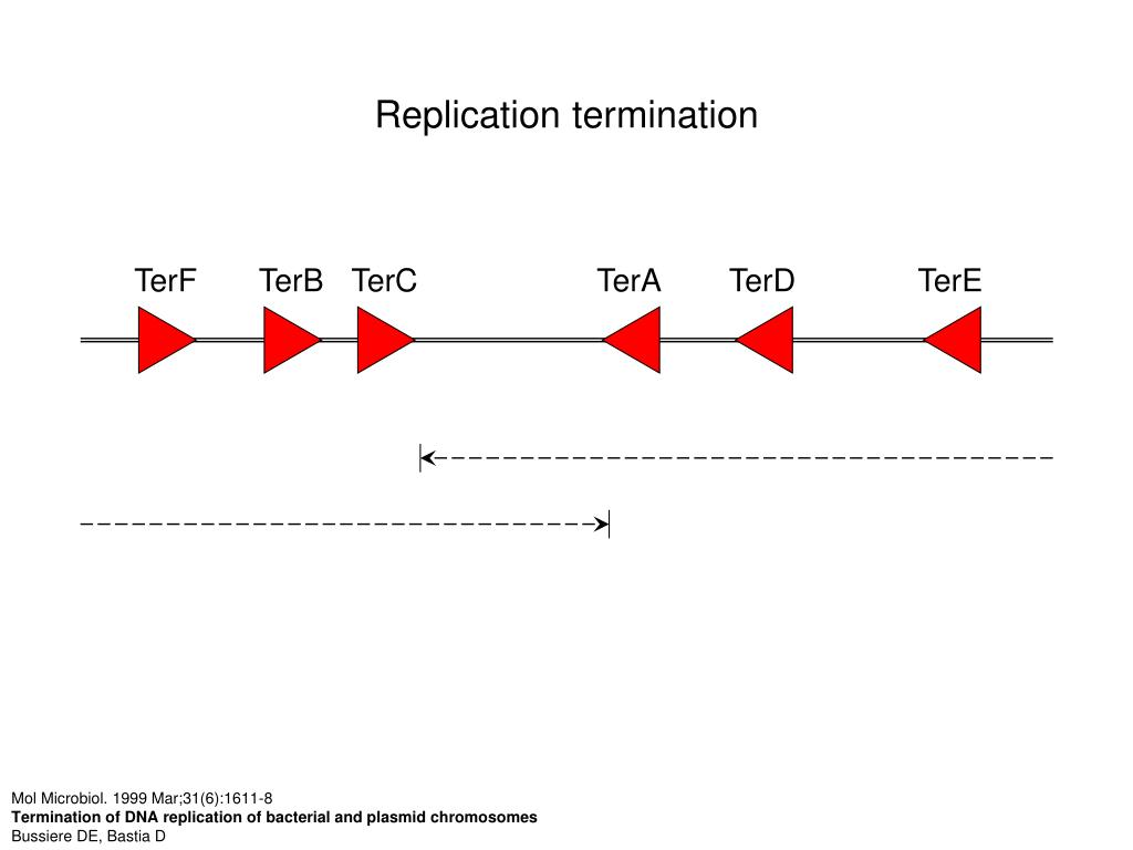 Replication termination