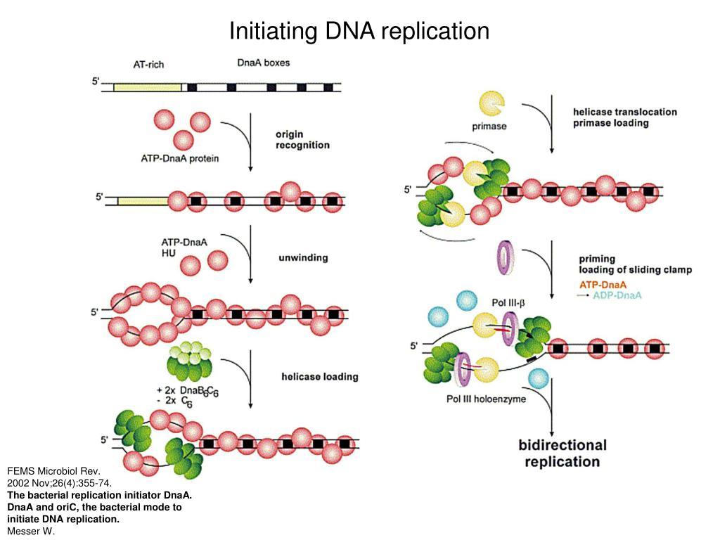 Initiating DNA replication