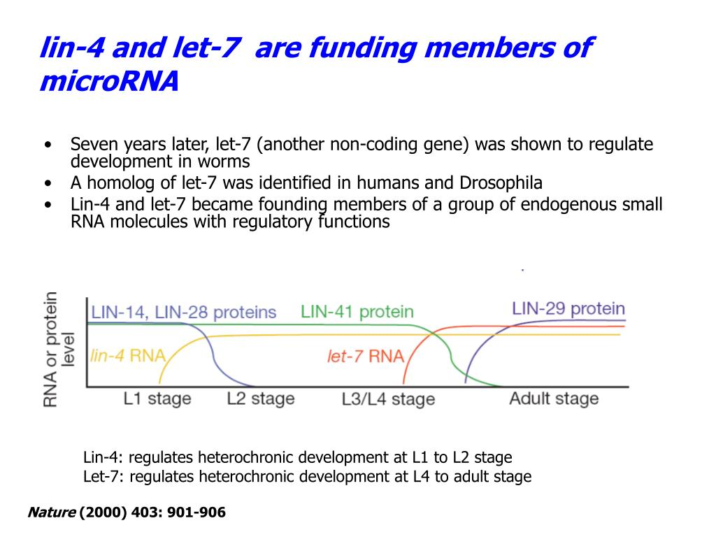 lin-4 and let-7  are funding members of microRNA