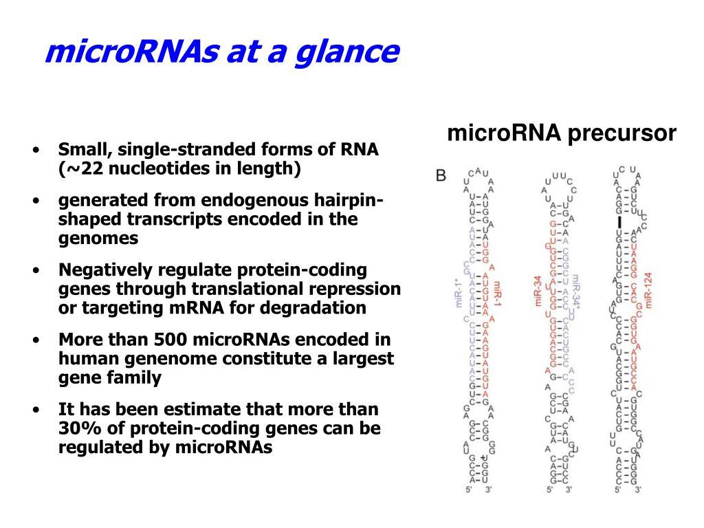 microRNAs at a glance