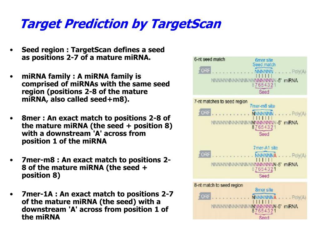 Target Prediction by TargetScan