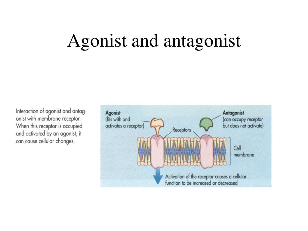 Agonist and antagonist