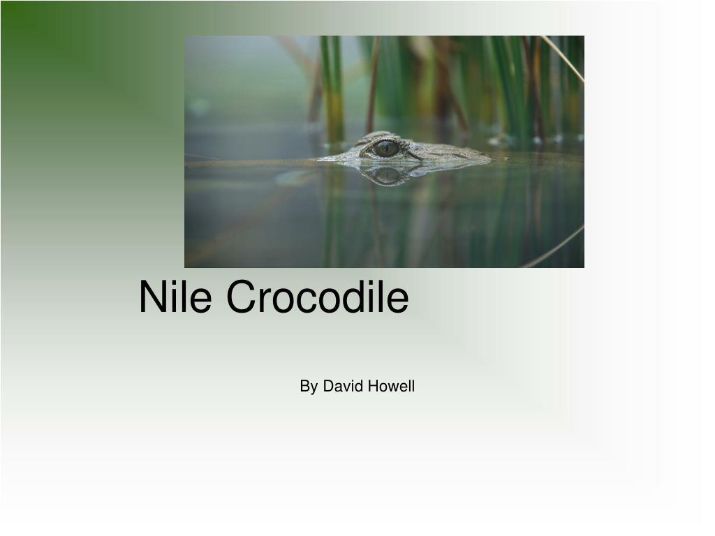 nile crocodile l.