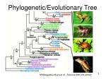 phylogenetic evolutionary tree