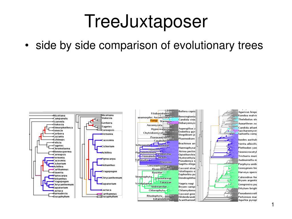 treejuxtaposer l.