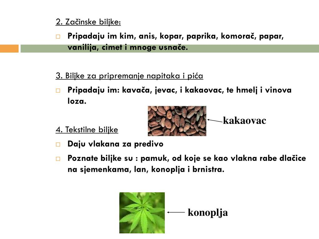 2. Začinske biljke: