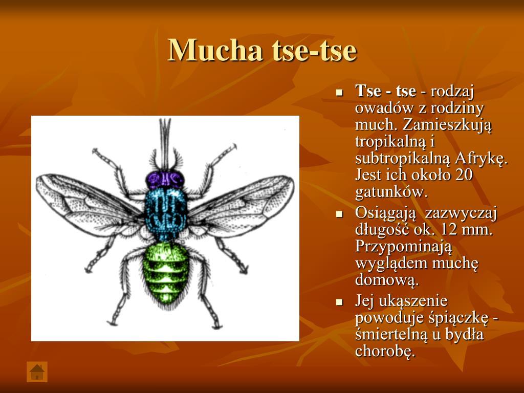 Mucha tse-tse