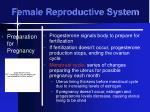 female reproductive system20