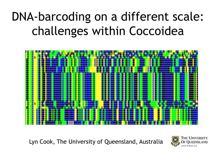 dna barcoding on a different scale challenges within coccoidea n.