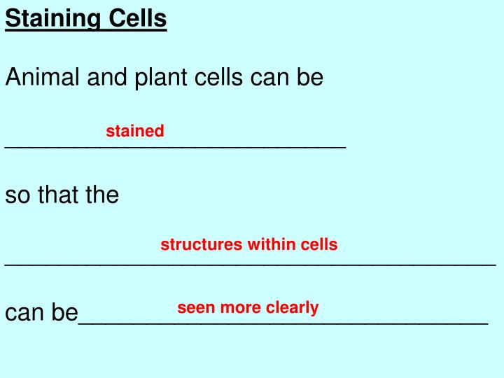 Staining Cells