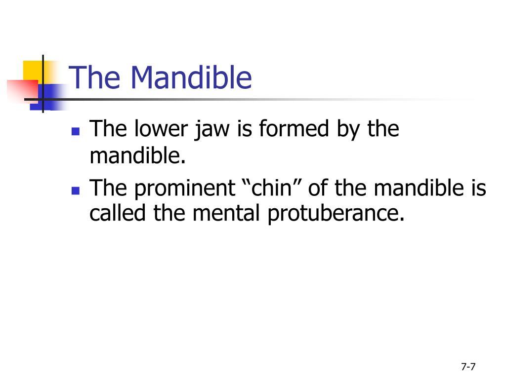 The Mandible