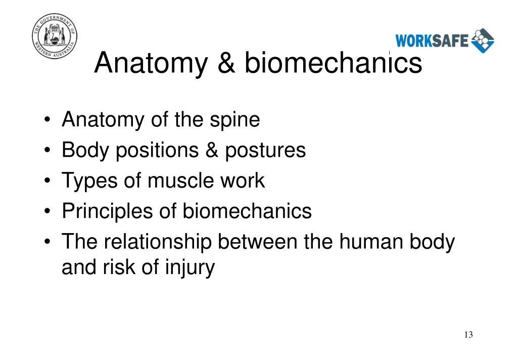 Anatomy & biomechanics