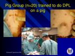 pig group n 20 trained to do dpl on a pig