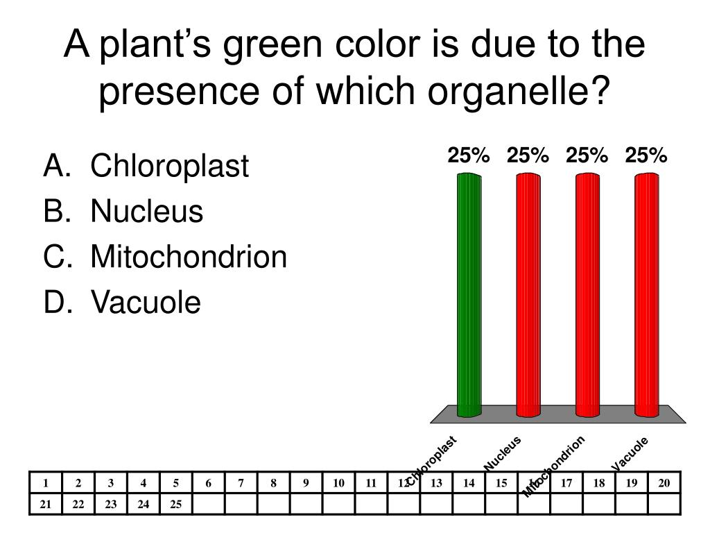 A plant's green color is due to the