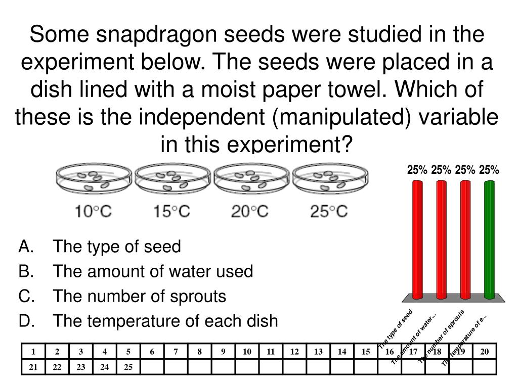 Some snapdragon seeds were studied in the experiment below. The seeds were placed in a dish lined with a moist paper towel. Which of these is the independent (manipulated) variable in this experiment?