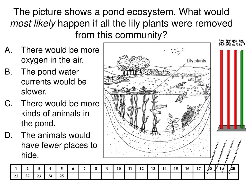The picture shows a pond ecosystem. What would