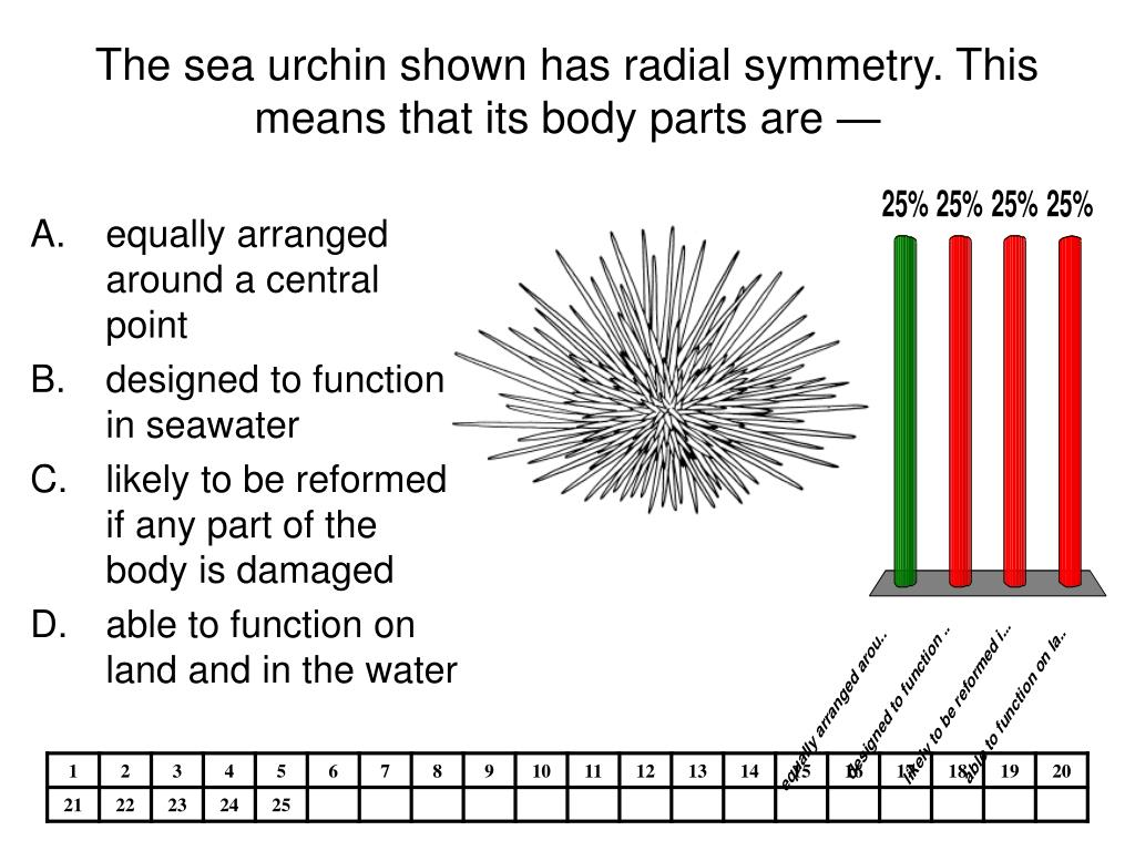 The sea urchin shown has radial symmetry. This means that its body parts are —