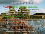 ornamental fish14