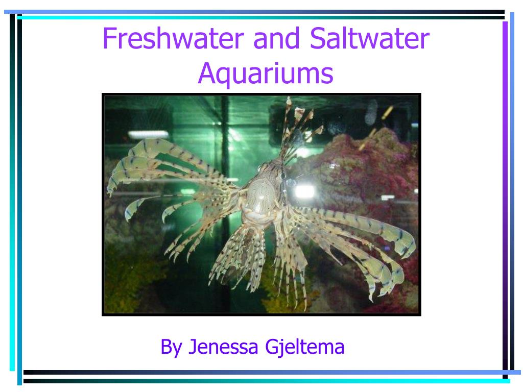 freshwater and saltwater aquariums l.