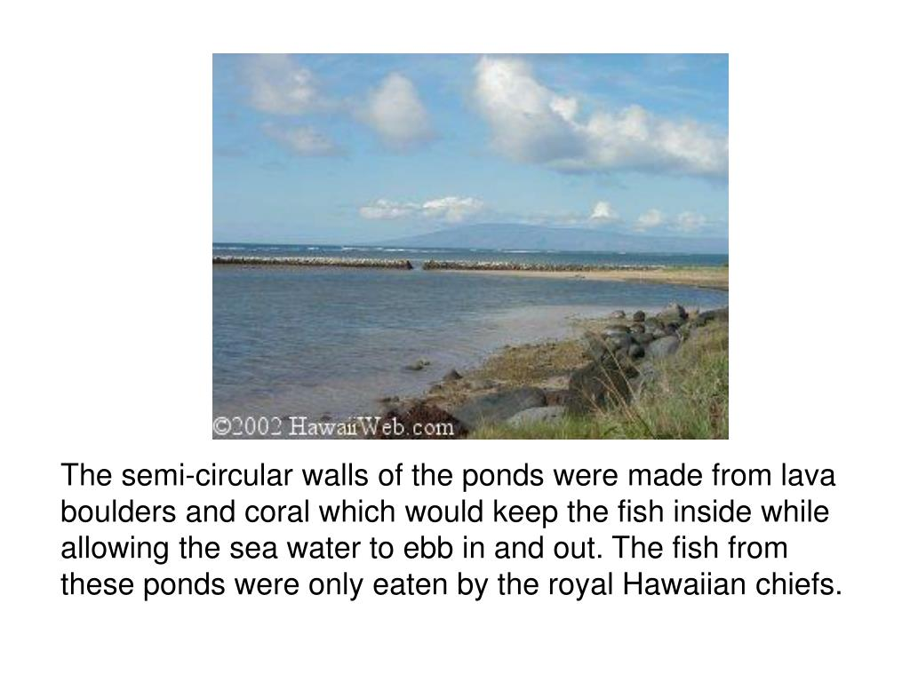 The semi-circular walls of the ponds were made from lava boulders and coral which would keep the fish inside while allowing the sea water to ebb in and out. The fish from these ponds were only eaten by the royal Hawaiian chiefs.