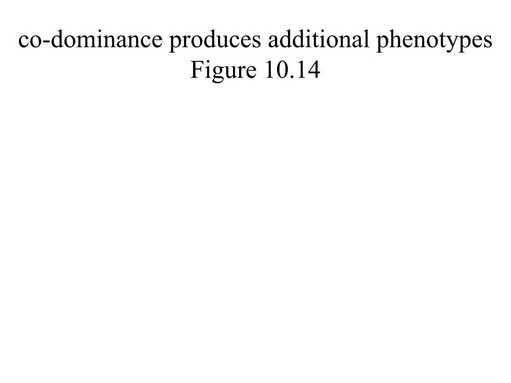 co-dominance produces additional phenotypes