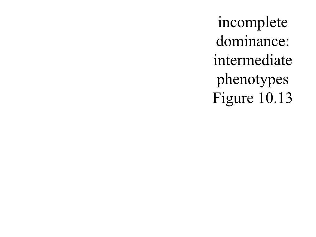 incomplete dominance: intermediate phenotypes