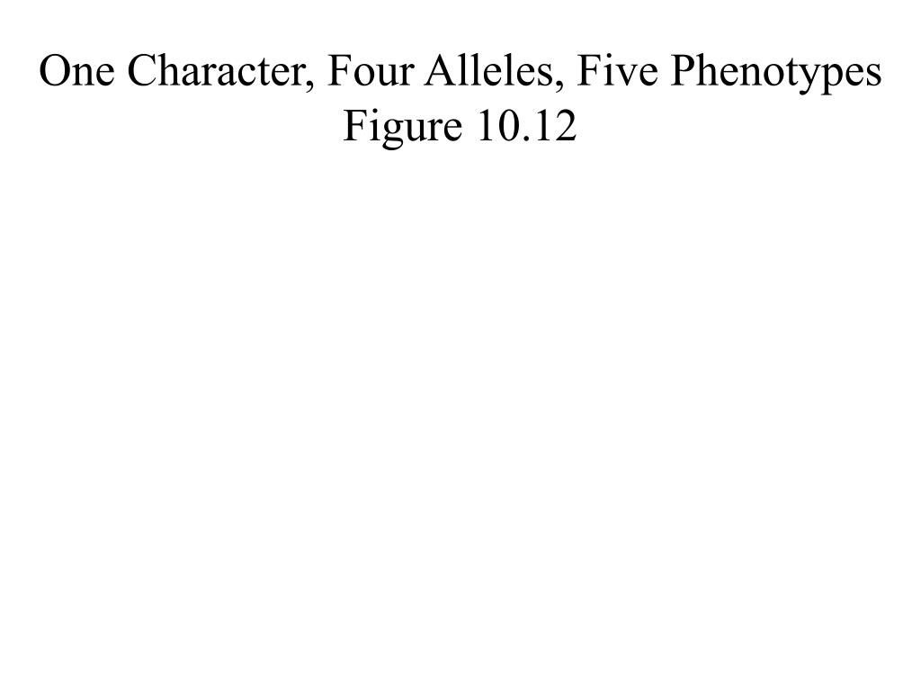 One Character, Four Alleles, Five Phenotypes