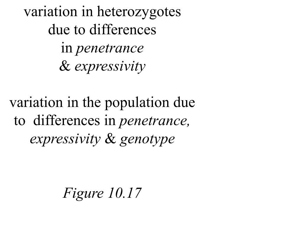 variation in heterozygotes