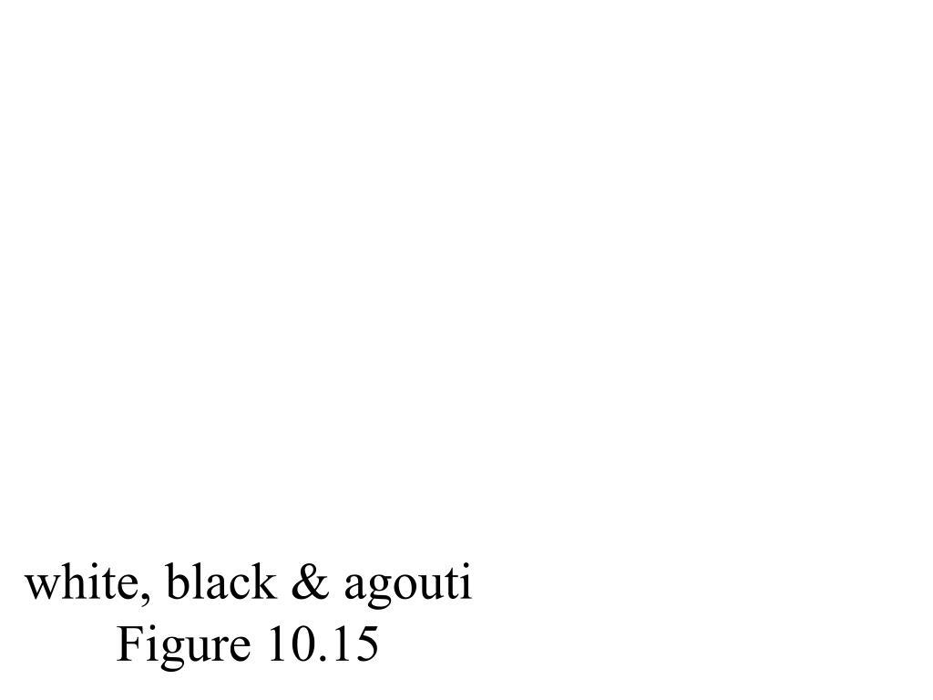 white, black & agouti  Figure 10.15