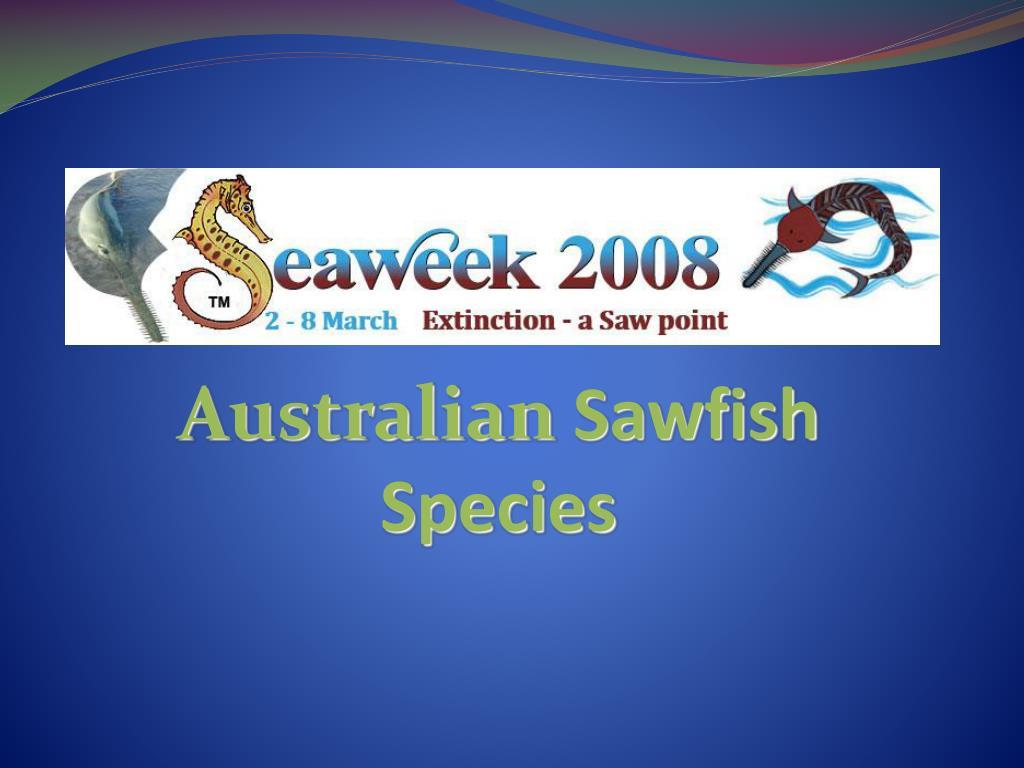 australian sawfish species l.