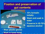fixation and preservation of gut contents